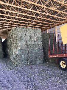 Top Quality Small Square Bale Horse Hay