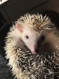 2 baby hedgehogs