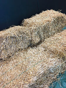 Hay wanted -sam squares or  rounds  buckhorn ennismore selwyn