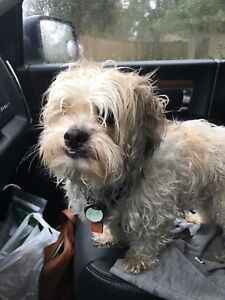 Lost dog has been Found!