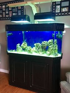 90 Gal Saltwater Tank and Equipment