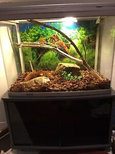 Complete Eastern water dragon setup Calwell Tuggeranong Preview