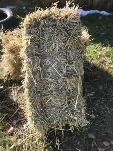 Small square green feed hay bales