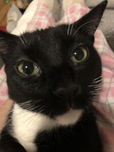 LOST CAT SANDY HILL