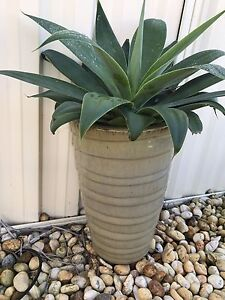 Glazed pot with agave Thornton Maitland Area Preview