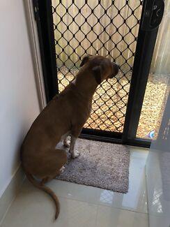 Giveaway Dog