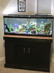 Fish tank 75 gal