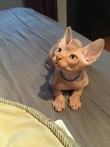 Chaton sphynx male Red tabby