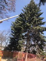 Calgary trees service 24/24 service for emergency