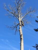 Tree Trimming / Removal services