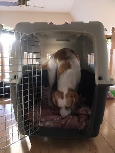 Extra large Dog Kennel - excellent condition