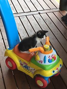 Free kitten Clarence Town Dungog Area Preview