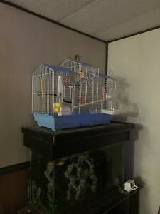 Budgie with large cage