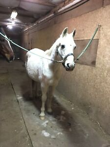 Pony Available for Part Lease
