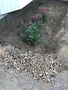 Free rocks and gravel from garden