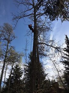 Extreme Dragonfly Tree Services now in Calgary!