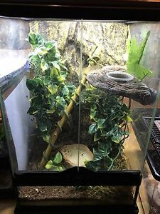 Two female crested geckos