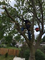 Professional tree cutting and trimming.