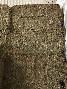 HORSE HAY 3 by 5 large squares
