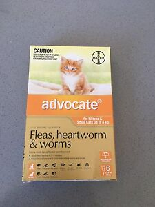 Advocate for kittens and cats up to 4kg Eagleby Logan Area Preview