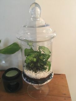 Tiny garden terrarium in glass jar - gift or home decor
