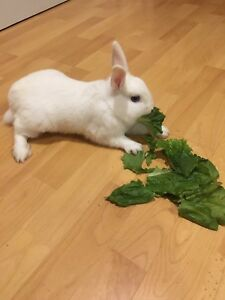 Bunny available to good home