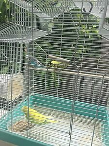 Birds for sale Noble Park Greater Dandenong Preview