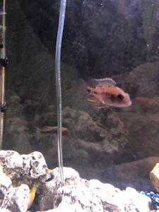 Fish OBO