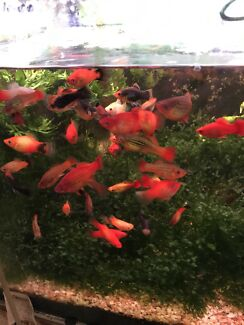 Fish discounted