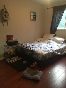 Room for rent - female tenant