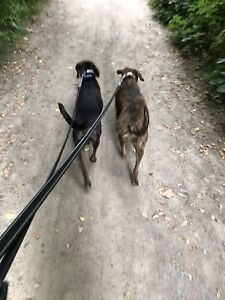 Do you run out of time to walk your dog?