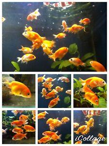 bettas sale | Fish | Gumtree Australia Free Local Classifieds