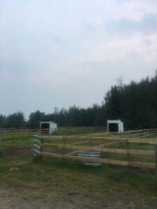 Horse Boarding 10 mins from Dawson Creek