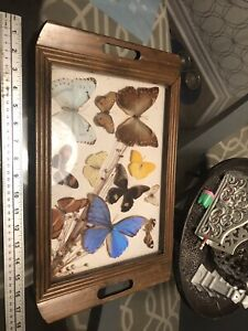 Vintage shadow box butterfly (real) tray