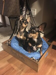 Looking for a small apartment for 2 students and pets