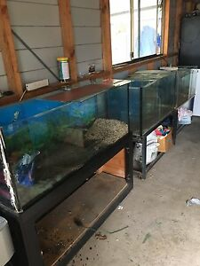 Fish tanks for sales. (All for 100$) Berala Auburn Area Preview