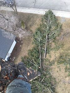 Top to bottom tree service