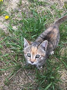 Lost kitty