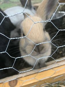 6 baby rabbits for sale
