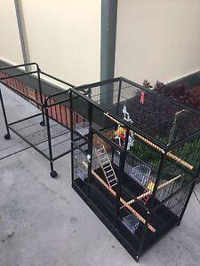 Bird Cage Stockton Newcastle Area Preview