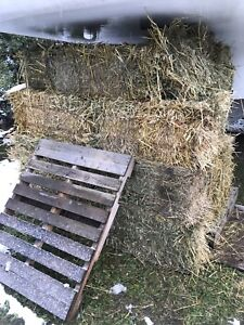 Greenfeed Square Hay Bales