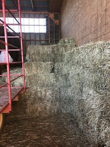 GREAT FIRST CUT HAY