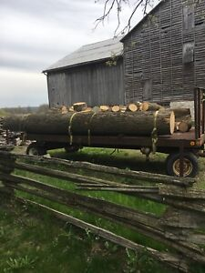 wood for sale - White Ash Logs