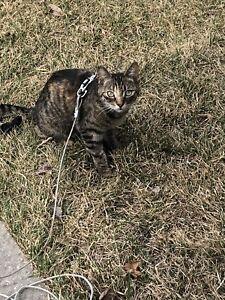 LOST CAT - ST. BONIFACE