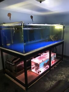 Monster fish tank forsale or trade