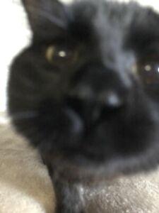 Chat noir a donner