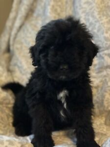 Go Adopt Dogs Puppies Locally In Canada Kijiji