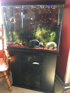 50 gallon fish tank and tons of accessories