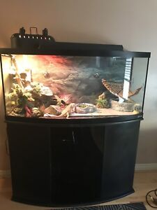 Bearded Dragons 72 Gallon Bow Front Tank