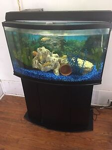 55 gallon Bowfront Tank with stand and accessories